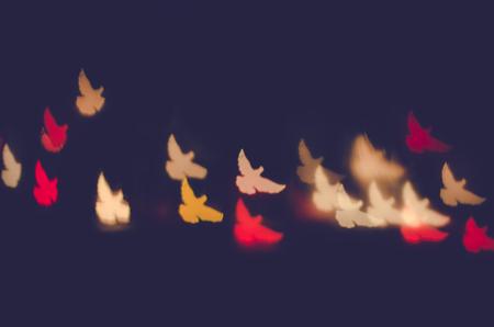 dove bokes against dark background