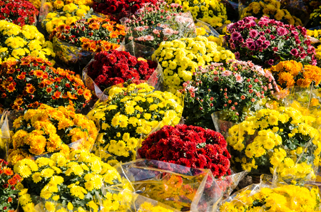 chrysanthemum flowers bouquets in the cementery Stock Photo