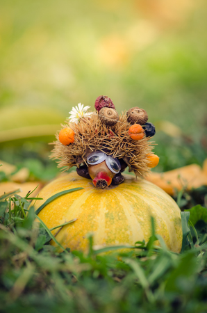 lovely autumn hedgehog figure made of chestnut posing in the orange pumpkin in green grass Stock Photo