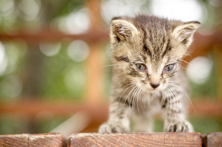 adorable cute kitty cat black white with blue eyes