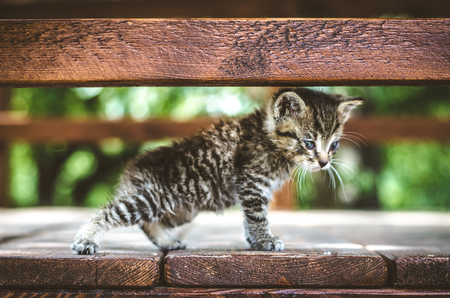 adorable cute kitty cat black white with blue eyes trying to walk