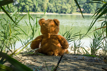 teddy bear toy sitting back to the camera alone at the lakeside