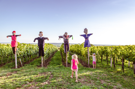 group of scary and funny scarecrows in vineyard field