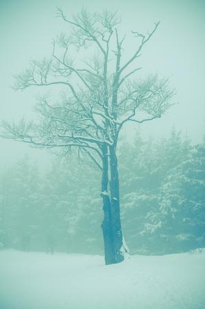 winter forest covered by snow Reklamní fotografie