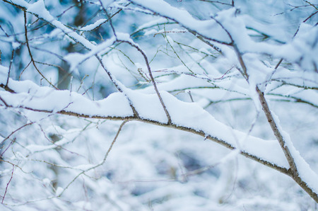 twig in winter forest covered by snow