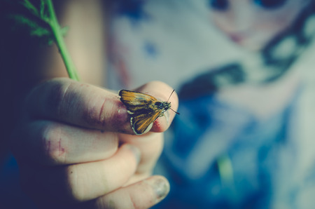 little red butterfly bug in human hand Stockfoto