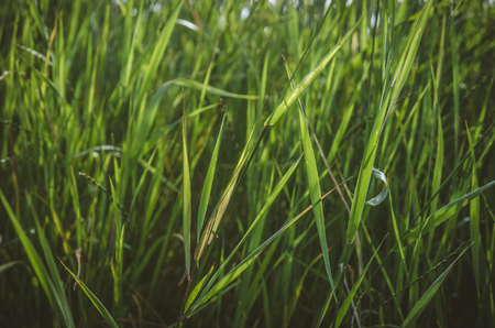 blades of green grass in the countryside Stock Photo