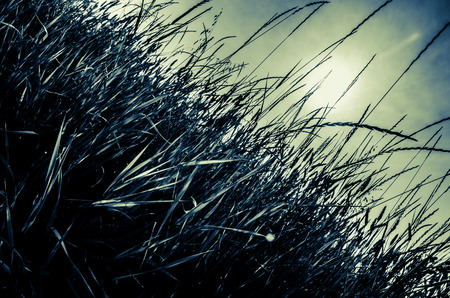 blades of grass in the countryside and afternoon sunset 免版税图像