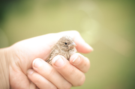 little lovely sparrow in human hand
