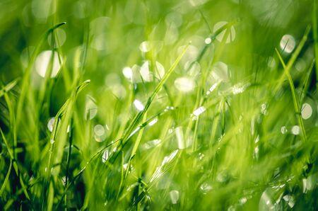 Nahaufnahme von grünem hellem nassem Gras mit Bokeh-Effekt