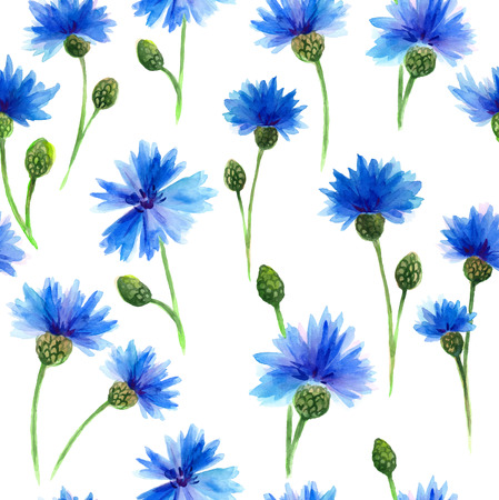 inequality: Watercolors blue cornflowers in white background. Watercolors painting. Floral background. Stock Photo
