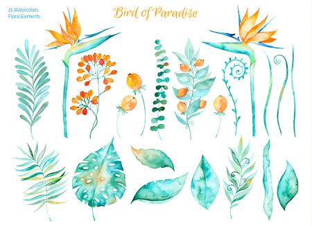 Vector bloemen set.Colorful collectie met tropische bladeren en bloemen van het paradijs, waterverftekening. Tropische bladeren stellen. Set van floral elementen voor uw composities.