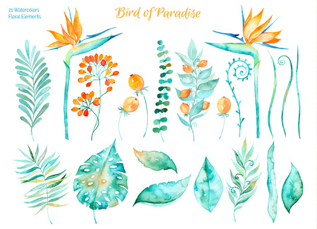 strelitzia: Vector floral set.Colorful collection with tropical leaves and flowers of Paradise, watercolor drawing. Tropical leaves set. Set of floral elements for your compositions.