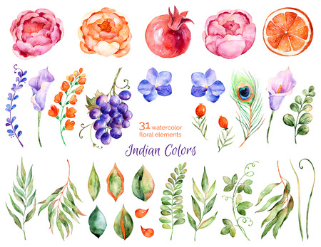 peacock: Colorful floral collection with roses, flowers, leaves, pomegranate, grape, callas, orange, peacock feather, with 31 Colorful floral watercolor elements.Set collection of floral elements for your compositions Stock Photo