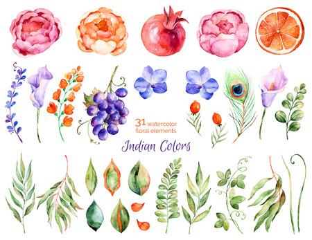Kleurrijke bloemen collectie met rozen, bloemen, bladeren, granaatappel, druif, callas, oranje, pauwenveer, met 31 kleurrijke bloemen aquarel elements.Set verzameling van florale elementen voor uw composities Stockfoto
