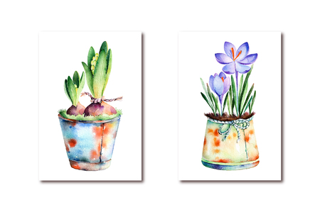 rusting: 2 High quality painted watercolor- Rocus and hyacinth in shabby old pots. olorful illustration can be used for greeting cards, mothers day, wallpapers, invitation, blog for your own compositions Stock Photo