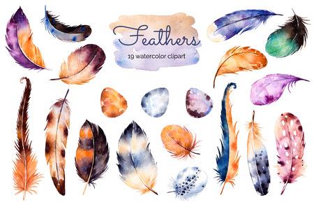 plumas de pavo real: Acuarela pintada a mano configurado con 19 elementos; plumas y huevos. Dibujado a mano la colección con plumas de colores y eggs.Feather aislado sobre fondo blanco. Se puede utilizar para su propio escenario, blogs, imprimir