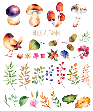 Bright collection with autumn leaves, flowers, branches, berries, acorns, blackberries, mushrooms, chestnut and little bird.Colorful autumn collection with 33 bright watercolor elements.Autumn collection.