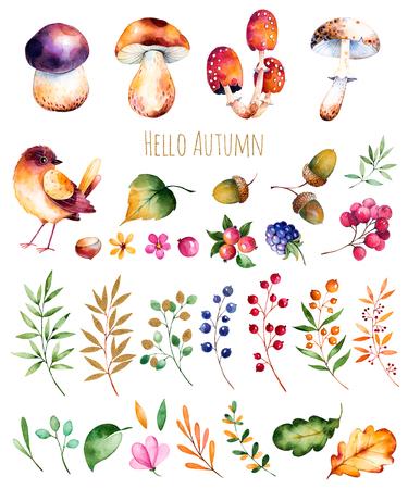 colección brillante con hojas de otoño, flores, ramas, bayas, bellotas, moras, setas, castañas y pequeña colección de otoño bird.Colorful con 33 brillante colección elements.Autumn acuarela.