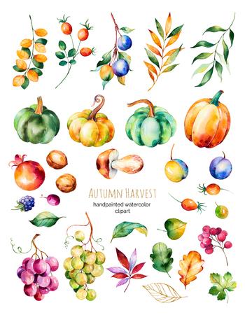 明るいコレクション秋の葉、枝、ベリー、ブラックベリー、キノコ、カボチャ、クルミ、ブドウのブドウ、プラムなど。カラフルな秋収穫コレクシ 写真素材