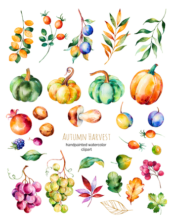 Bright collection with fall leaves, branches, berry, blackberry, mushroom, pumpkins, walnut, vine grapes, plums and more.Colorful autumn harvest collection with 31 watercolor elements.For create your single Stock Photo