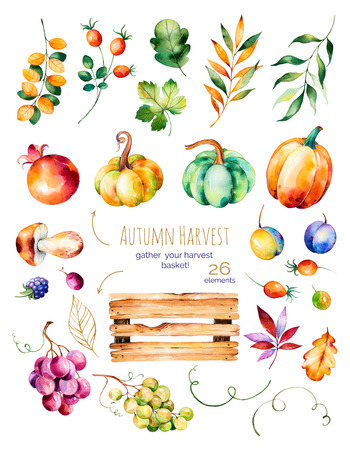 Bright collection with fall leaves, branches, wooden basketball, pomegranate, mushroom, pumpkins, grapes vine, plum and more.Colorful autumn collection with 26 watercolor elements.Gather your harvest basket!