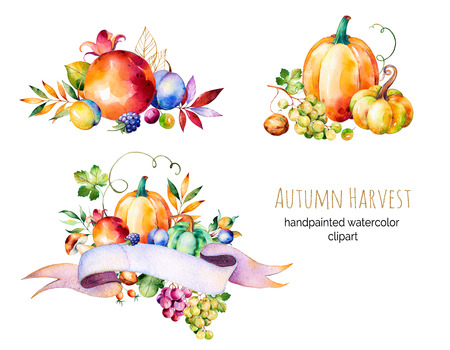 fall mushroom: Colorful autumn collection with fall leaves, branches, berry, blackberry, mushroom, pumpkins, walnut, vine grapes, plums and more.3 beautiful bouquet for your own design.Autumn harvest.For create your single