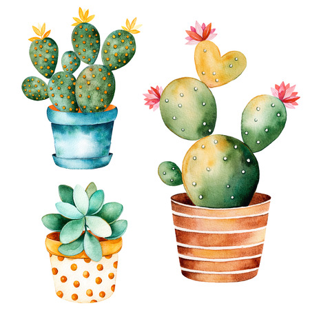 Watercolor handpainted plant cactus and succulent plant in clipart pot.Watercolor, individual flower pot isolated on white background.Perfect for your project, cover, wallpaper, pattern, gift paper, wedding Stockfoto