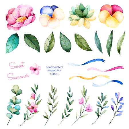 wedding decoration: Foral collection with flowers, peony, leaves, branches, succulent plant, pansy flowers, ribbons and floral more.Colorful collection with 24 floral watercolor elements.Set of elements.Sweet Summer collection