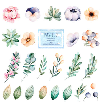 eucalyptus: Foral pastel collection with flower, roses, leaves, branches, succulents, eucalyptus leaves, pansy flower and more.Colorful collection with 25 floral watercolor elements.Set of elements.Pastel 2 collection Stock Photo