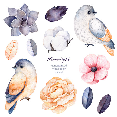 Beautiful winter collection with branches, cotton plants, flowers, little bird, colorful leaves, succulent.Winter floral collection with 11 floral watercolor elements.Set of elements.Moonlight collection.