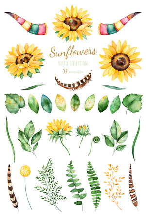 Handpainted watercolor sunflowers.31 clipart bright watercolor of sunflowers, leaves, branches, feathers, deer horns. Can be used for your project, greeting cards, wedding, cards, bouquets, wreaths, invitation