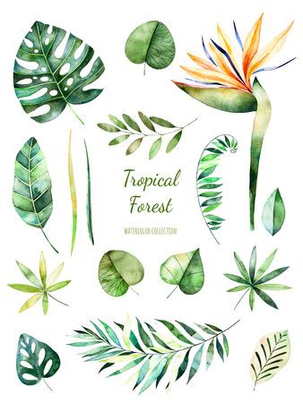 Tropical Leafy-collectie. Met de hand geschilderde bloemenwaterverfelementen Waterverfbladeren, takken, bloem. Perfectioneer voor u enige projecten, malplaatje, huwelijksuitnodigingen, grafische groetkaarten, citaten. Stockfoto