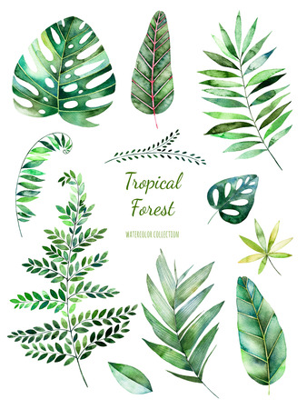 Tropical Leafy collection. Handpainted floral watercolor elements.Watercolor leaves, branches.Perfect for you single projects, template, wedding invitations, greeting cards, graphic, quotes, post 版權商用圖片