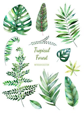 Tropische Leafy collectie. Handgeschilderde bloemenwaterverf elementen.Watercolor leaves, branches.Perfect voor u enkele projecten, sjabloon, bruiloft uitnodigingen, wenskaarten, grafische, citaten, post