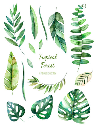 Tropical Leafy collection. Handpainted floral watercolor elements.Watercolor leaves, branches.Perfect for you single projects, template, wedding invitations, greeting cards, graphic, quotes, post Stok Fotoğraf
