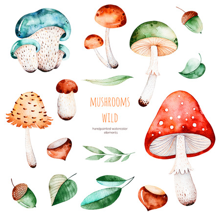 Bright collection with autumn leaves, flowers, branches, acorns, multicolored mushrooms, chestnut.Colorful autumn collection with 15 watercolor elements.Autumn collection.Perfect for your creation