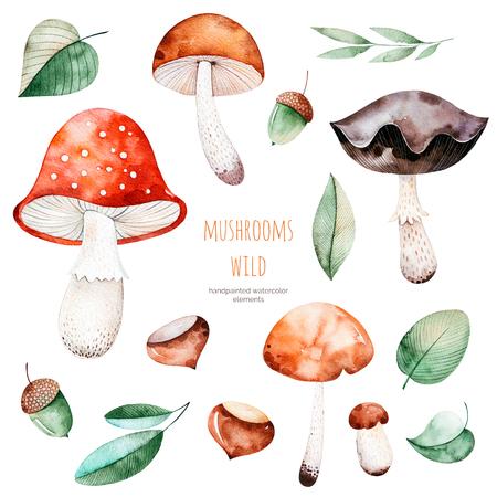Collezione luminosa con foglie di autunno, fiori, rami, ghiande, funghi multicolori, castagno. Collezione autunnale colorata con 15 elementi di acquerello. Collezione autunnale.Perfect per la tua creazione Archivio Fotografico - 83924366
