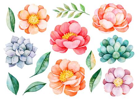 Handbeschilderd aquarel pioenrozen, bloemen, vetplanten, tak en bladeren. 14 mooie clipart. Kan worden gebruikt voor uw project, wenskaarten, bruiloft, verjaardagskaarten, boeketten, kransen, uitnodigingen, logo's