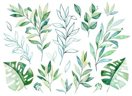 Aquarellgrünsammlung. Beschaffenheit mit Grüns, Niederlassung, Blättern, tropischen Blättern, Laub. Vervollkommnen Sie für Hochzeit, Einladungen, Grußkarten, Zitate, Muster, Blumenstrauß, Logos, Geburtstagskarten, Ihr einzigartiges schaffen usw.