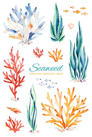 Oceanic Algen Aquarell gesetzt. Handgemalte mehrfarbige Unterwasserkorallenriffe, Muscheln und Fische. Perfekt für Einladungen, Partydekorationen, bedruckbar, Handwerksprojekt, Grußkarten, Blogs, Aufkleber