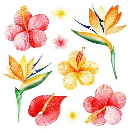 Watercolor tropical flowers collection.Texture with plumeria, hibiscus, bird of paradise flowers.Perfect for wedding, invitations, greeting cards, quotes, pattern, bouquet, logos, Birthday cards, wallpapers