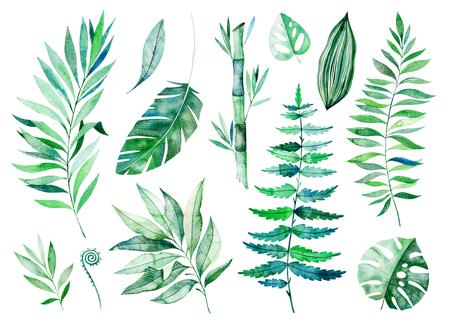 Aquarel greens-collectie. Textuur met greens, tak, bladeren, tropische bladeren, bamboe. Perfect voor bruiloft, uitnodigingen, wenskaarten, citaten, patroon, boeket, logo's, verjaardagskaarten, uw unieke creatie enz.