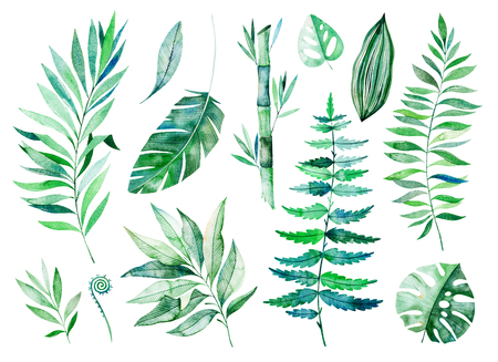Watercolor greens collection.Texture with greens, branch, leaves, tropical leaves, bamboo.Perfect for wedding, invitations, greeting cards, quotes, pattern, bouquet, logos, birthday cards, your unique create etc
