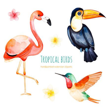 Watercolor exotic birds collection.Texture with toucan, flamingo, hummingbird and plumeria flowers.Perfect for wedding, invitations, greeting cards, quotes, pattern, bouquet, logos, Birthday cards, wallpapers