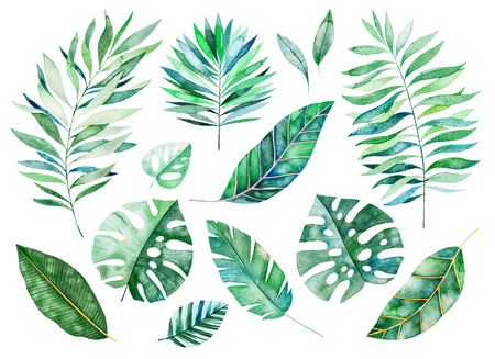 Watercolor greens collection.Texture with greens, branch, leaves, tropical leaves, foliage.Perfect for wedding, invitations, greeting cards, quotes, pattern, bouquet, logos, birthday cards, your unique create etc. 스톡 콘텐츠