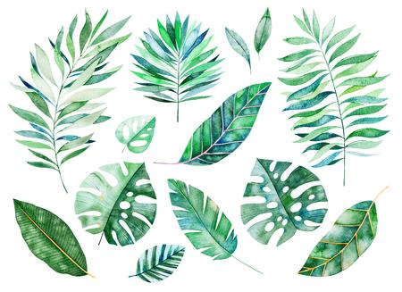 Raccolta di verdi dell'acquerello. Struttura con verdi, ramo, foglie, foglie tropicali, fogliame. Perfetto per matrimonio, inviti, biglietti di auguri, citazioni, modello, bouquet, loghi, biglietti d'auguri, la tua creazione unica ecc. Archivio Fotografico - 94137436