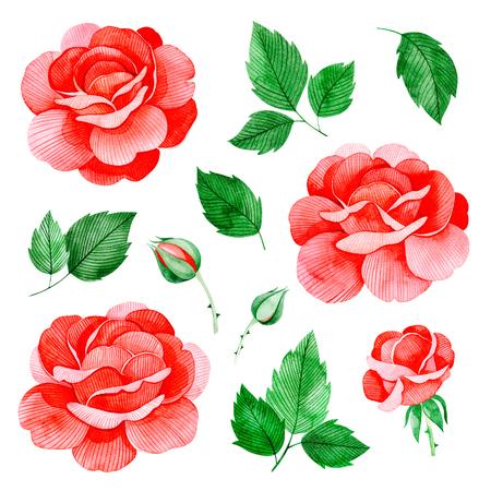 手描きの水彩画はバラの花と葉。素敵なクリップアートは孤立しました。あなたのプロジェクト、グリーティングカード、結婚式、誕生日カード、 写真素材
