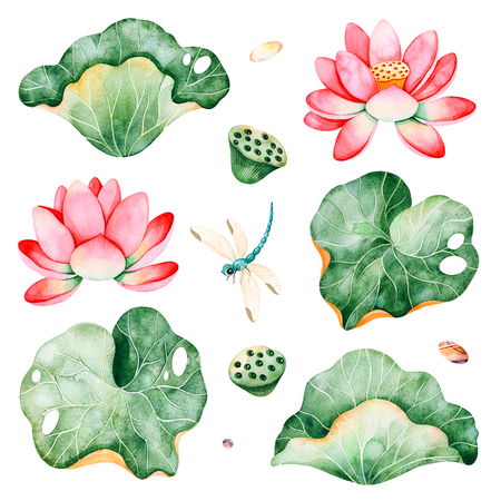 12 Lotus watercolor elements.Isolated water lilies, leaves and dragonfly on white background.Perfect for your project, wedding, packaging, wallpaper, cover design, packaging, print, patterns etc Foto de archivo - 106933175