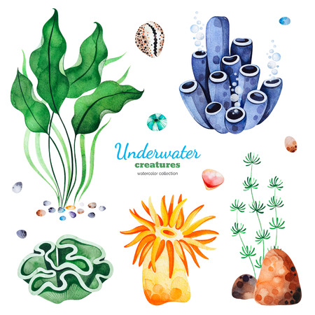 Underwater creatures. Watercolor collection with multicolored coral reefs, seashells and seaweeds.Perfect for invitations, party decorations, printable, craft project, greeting cards, blogs, stickers etc.